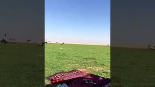 شباب يلحقون الخاروف 😂😂😂😂 thumbnail