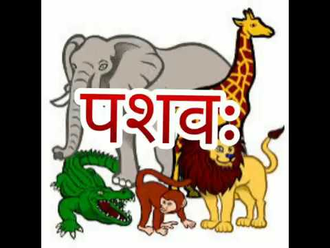 Animals name in Sanskrit
