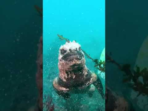 Asi me imagìno a Godzilla en el ocèano