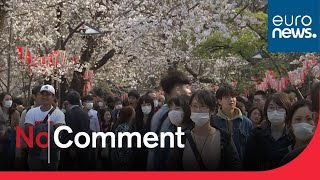 Japanese go out en masse to celebrate cherry blossom season