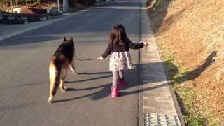 娘とシェパードの散歩その3 3歳の娘とシェパードの散歩です。 年々上手...
