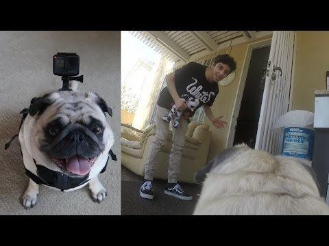 A DAY IN THE LIFE OF BOSLEY!! (GoPro Point of View) | FaZe Rug