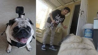 A DAY IN THE LIFE OF BOSLEY!! (GoPro Point of View)