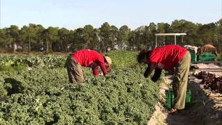 """What is crop rotation? - """"…"""