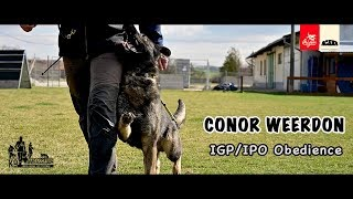 Conor (Mc) Weerdon - IGP(IPO) Obedience - March 2019 / 4K UltraHD