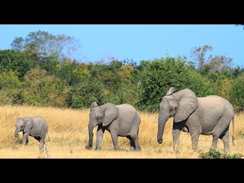 Safari in Zuid-Afrika en Kaapstad