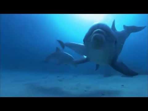 все дельфины в ураган