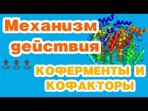 Ферменты-1//механизм действия, коферменты и кофакторы