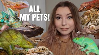 Meet My Pets! | All My 40+ Animals In One Video