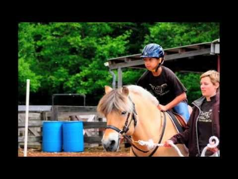 nwtrc's-kleng---horse-stars-hall-of-fame