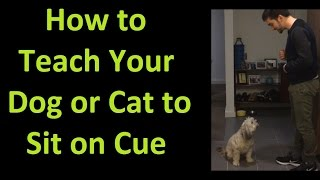 How To Teach Your Dog Or Cat To Sit On Cue
