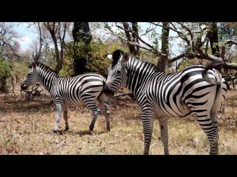 Botswana 2016 - Self Drive Safari Road Trip Video