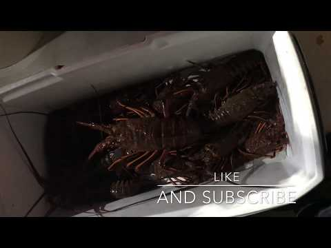 CALIFORNIA LOBSTER FISHING LIMITS (OPENER DAY)