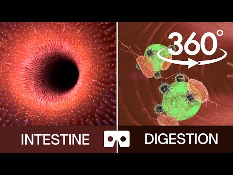 Impactall VR – Digestion ( Watch in 360 degree or virtual reality)