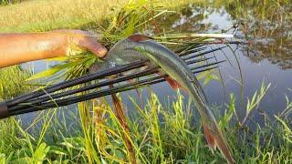 Amazing Best Kids By Hunting Wild Style Fishing & Pangas Fish