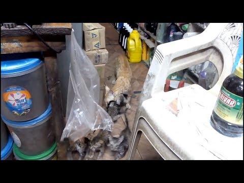 एक किराने की दूकान में बिल्लियों ने अपना घर बनाया   Cute Kittens   Cats in Shop   Indian Cats