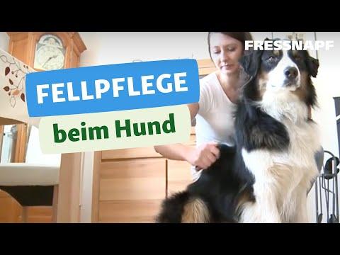 Fellpflege Hund I FRESSNAPF