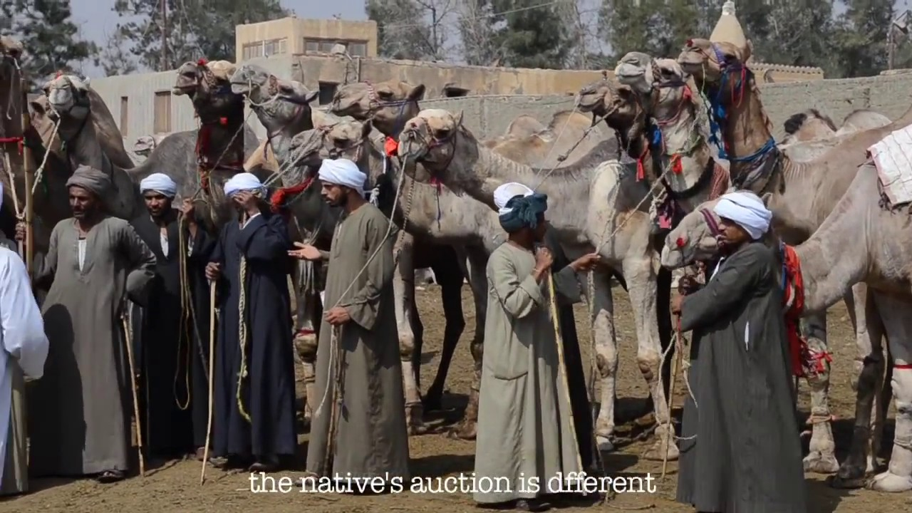 مشروع تخرج/كلية اعلام/عن سوق الجمال/بعنوان الله يبارك