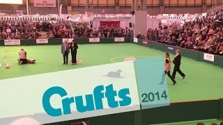 Obreedience | Set Exercise | Team Rottweiler | Crufts 2014