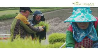[해뜨는농원] 친환경 우렁이농법으로 여주쌀, 진상미를 …
