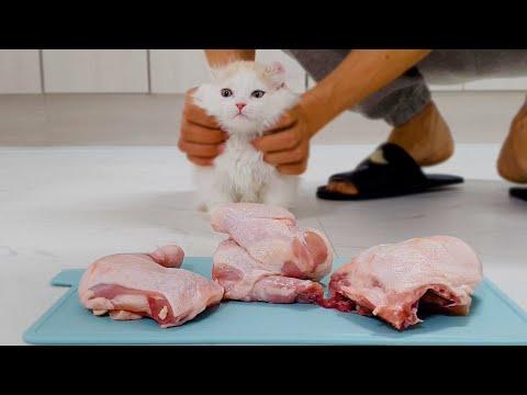 Cats Really Loves the Chicken!? #Raw Chicken VS #Boiled Chicken