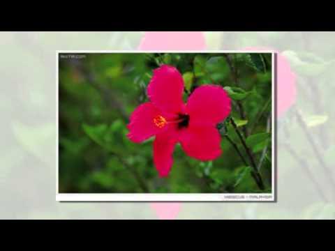 ดอกไม้ประจำชาติของประเทศสมาชิกอาเซียน