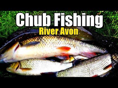 Bolo Fishing The River Avon
