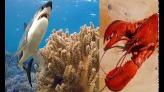 Learn Sea Animals | Sea Animals Names and sounds