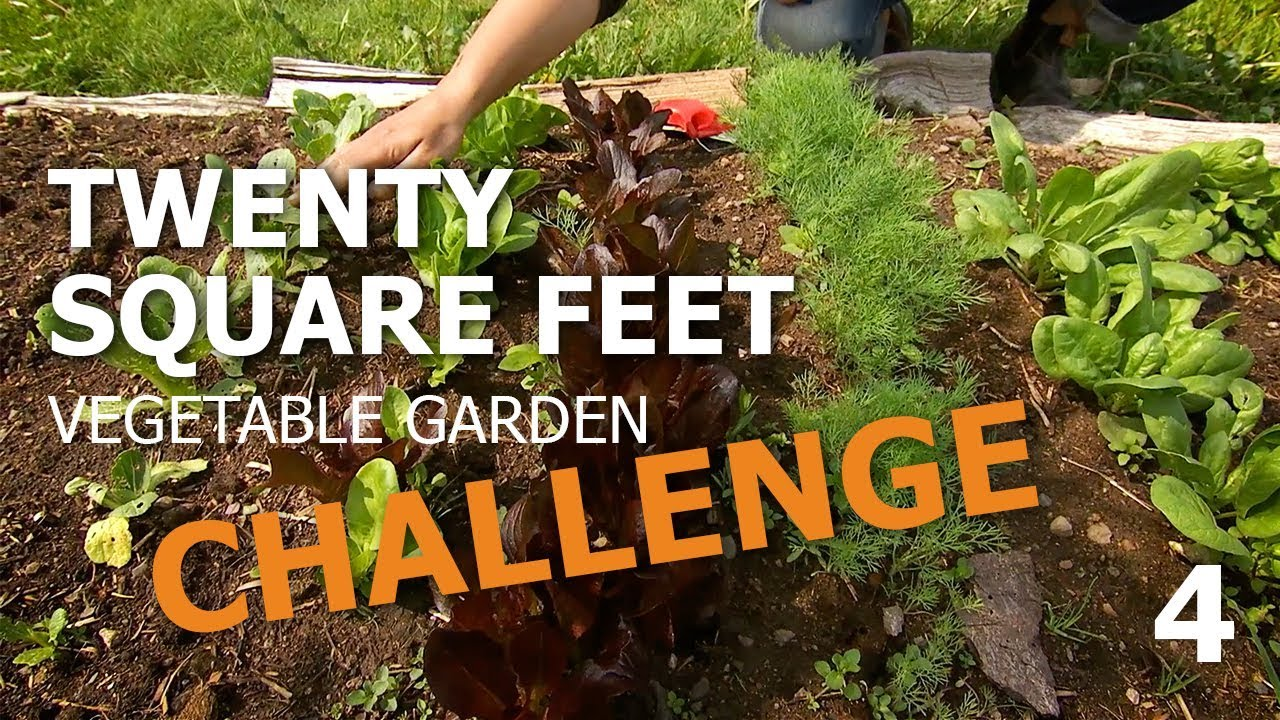 20 Square Feet Vegetable Garden Challenge – in a raised bed, part 4 ...
