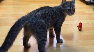 [My Pet] 고양이를 위한 바람직한 장난감, Des…