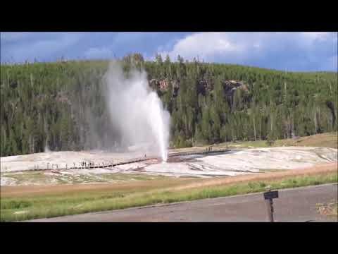 Yellowstone Wildlife Experience