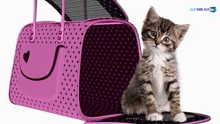 Travel with Pets • Aegean Pet Policy