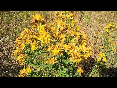 Вопрос: Распознайте,что это за растение (цветок) на фото?