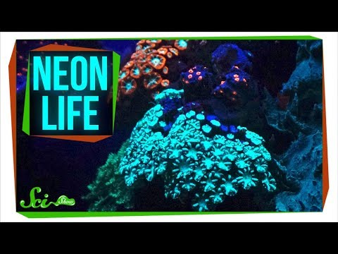Biofluorescence: A Neon World Hidden in Plain Sight