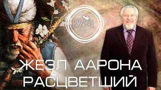 жезл Аарона расцветший - 14 февраля 2016 года - Сергей Ряховский