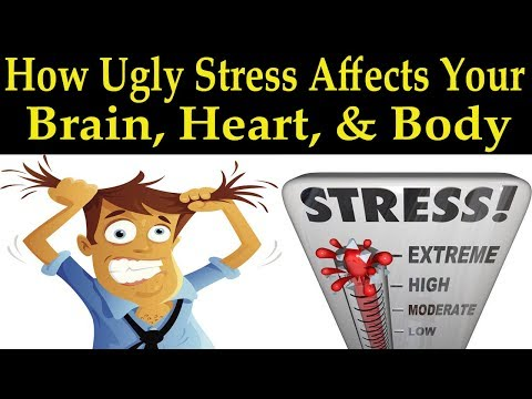 How Ugly Stress Affects Your Brain, Heart, & Body - Dr. Alan Mandell, D.C.