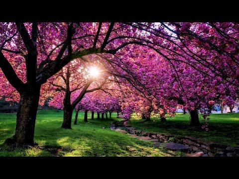 Сборник красивой музыки для души (весна) !!!