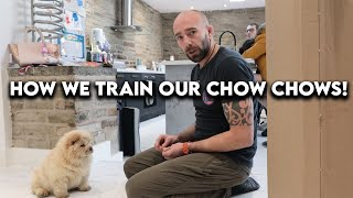 How we train our chow chows! [SUPER INTERESTING]
