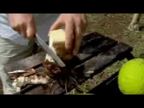 Taro Meal - World Food And Cooking - BBC