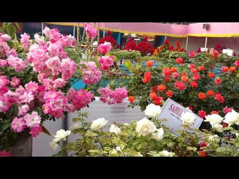 BEAUTIFUL ROSE GARDEN FLOWER SHOWPART1