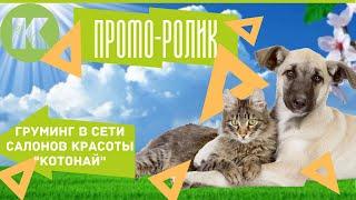 Груминг в сети салонов красоты для животных