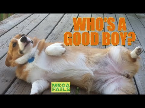 Who's a Good Boy?    Funny Dog Comp    MegaFails