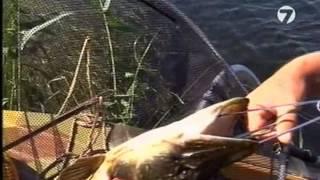 Диалоги о рыбалке № 18 - Дельтаро охота [видео рыбалка онлайн Bigfisher.in.ua]