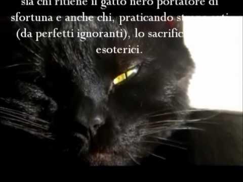 No Halloween-Si alla vita dei gatti.
