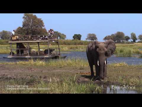 Kings Pool Camp - Eyes on Africa