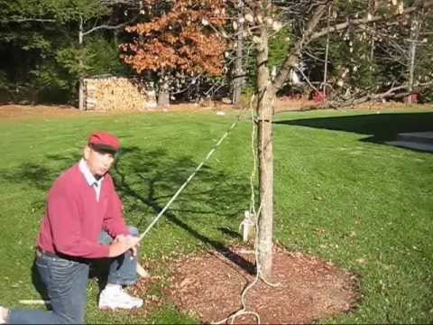 How To Make A Tree Grow Straight Youtube