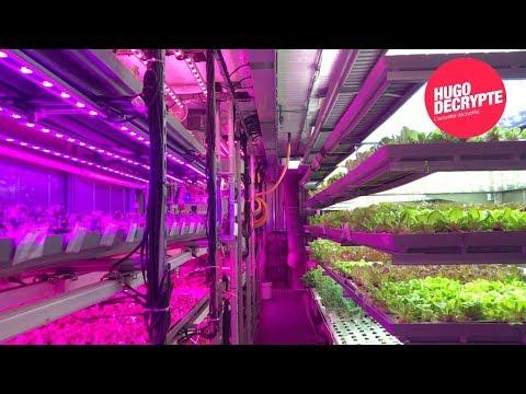LOS ANGELES : Cette ferme ultra-futuriste utilise 99% moins d'eau - Tour du monde #5