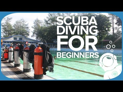 Scuba Gear For Beginners