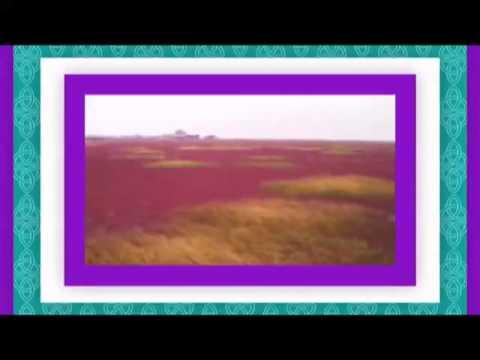 Playa roja de Panjin, una reserva natural en China.