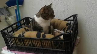 Murchik Gordi Junior le encanta la lavadora Samsung :))))